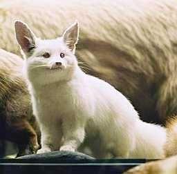 albino-(19).jpg
