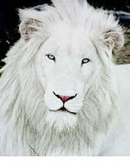 albino-(15).jpg