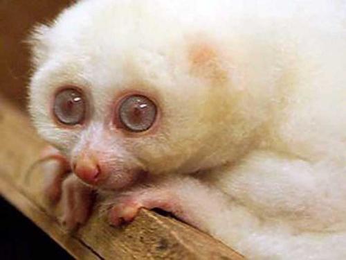 albino-(7).jpg