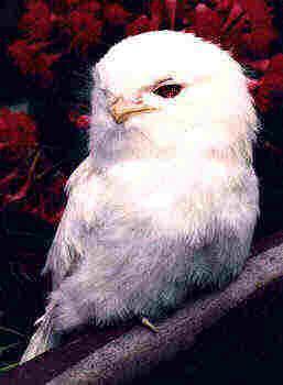 albino-(23).jpg