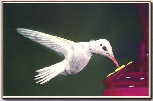 albino-(20).jpg