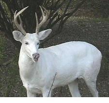 albino-(12).jpg