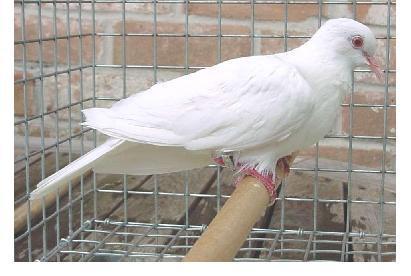 albino-(13).jpg