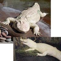 albino-(6).jpg