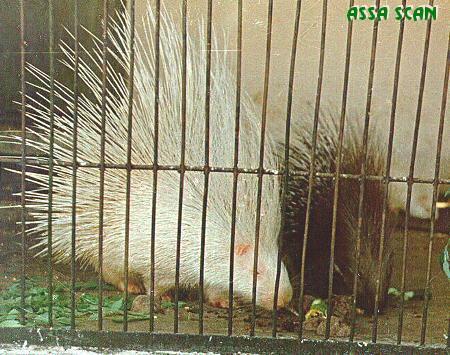 albino-(9).jpg