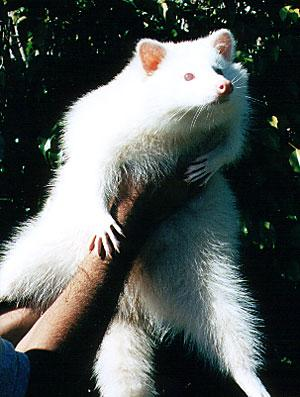 albino-(22).jpg