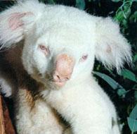 albino-(8).jpg
