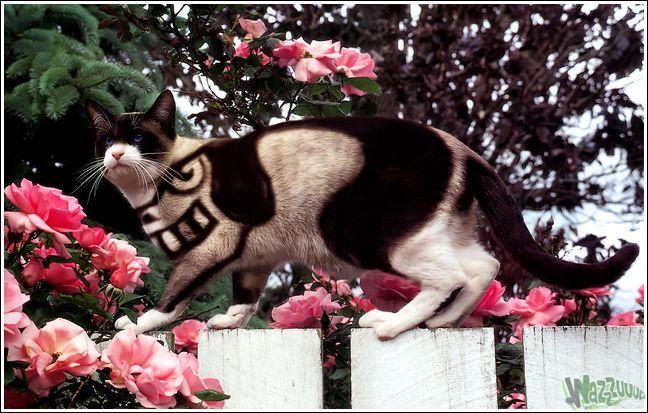Paintcat_16.jpg