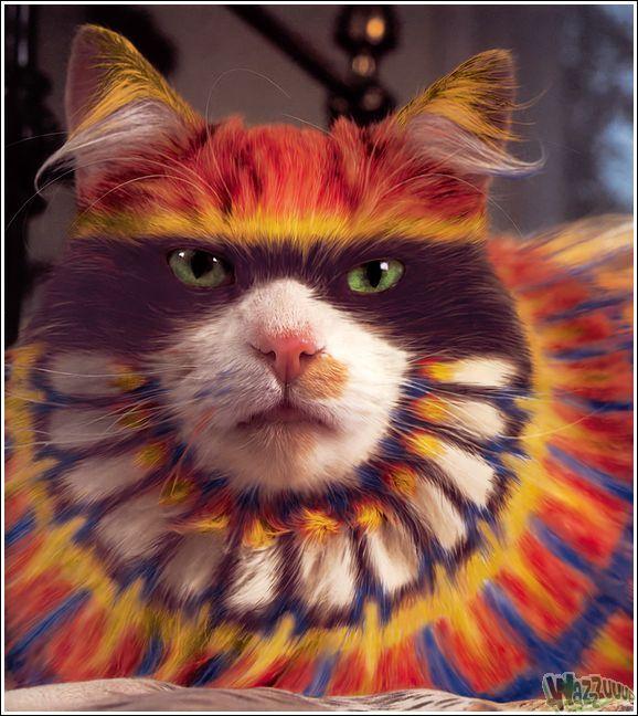 Paintcat_09.jpg