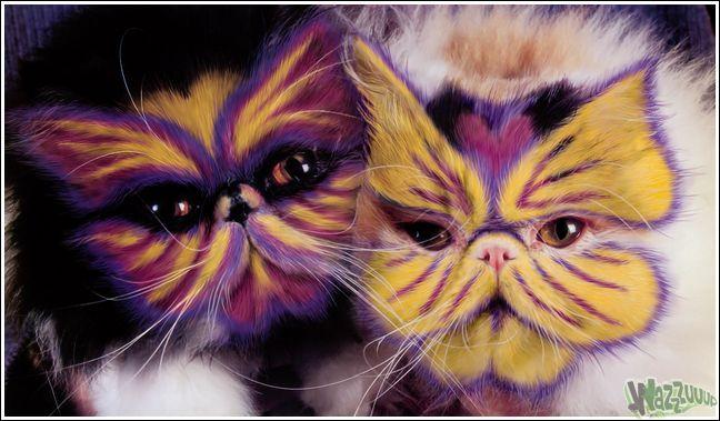 Paintcat_33.jpg