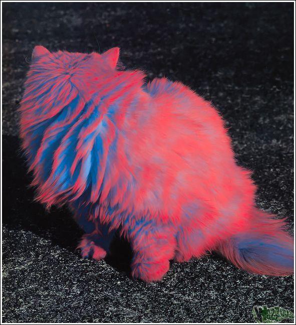 Paintcat_39.jpg