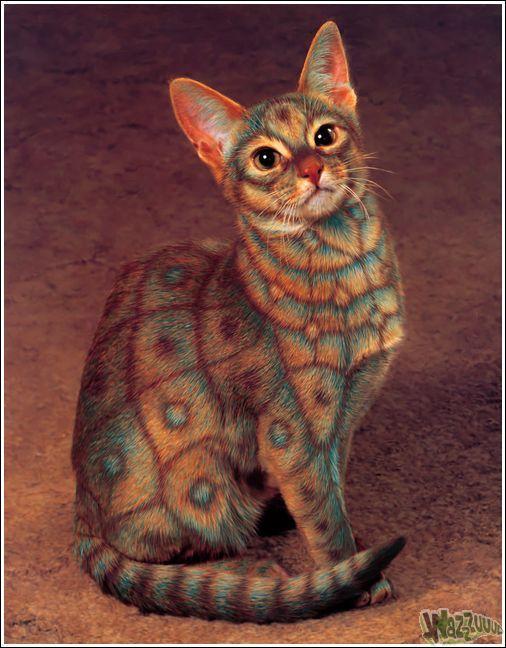 Paintcat_02.jpg