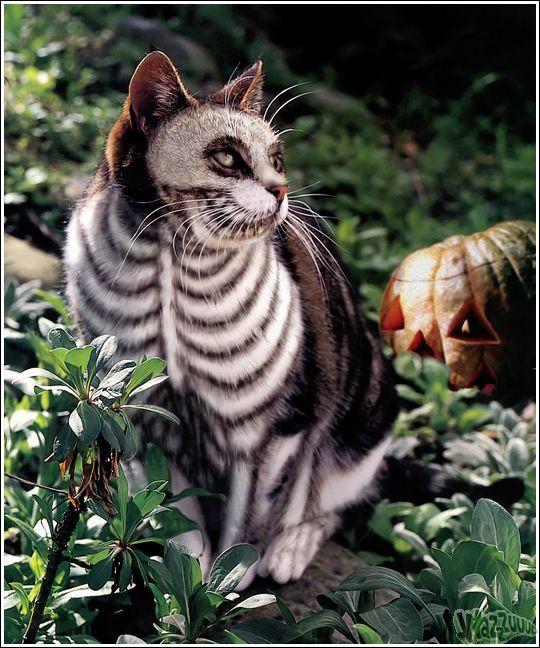 Paintcat_14.jpg