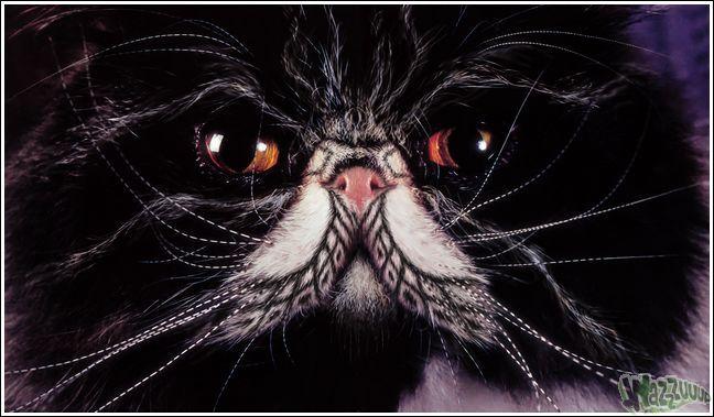 Paintcat_44.jpg