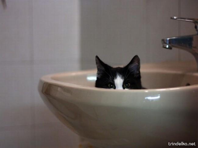 cats_in_sinks_04.jpg