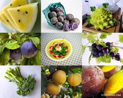 Самые необычные гибриды и сорта овощей и фруктов Thumb_78_0f26c00355248fbcdeaf671f9c340d9d