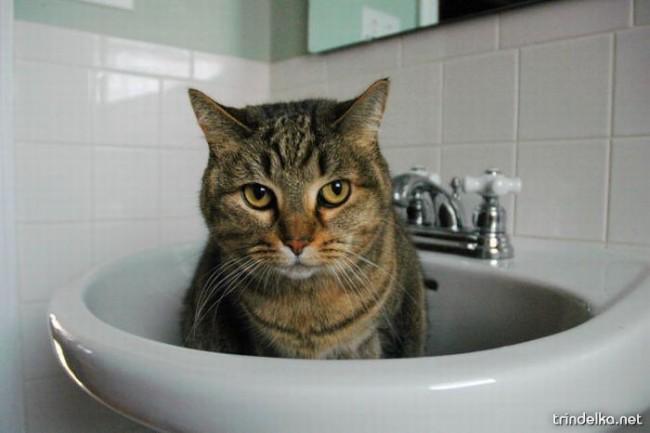 cats_in_sinks_10.jpg