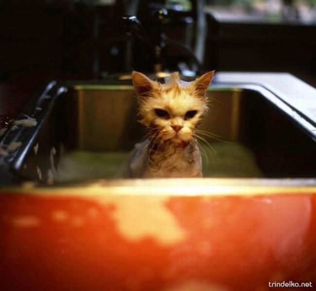 cats_in_sinks_15.jpg