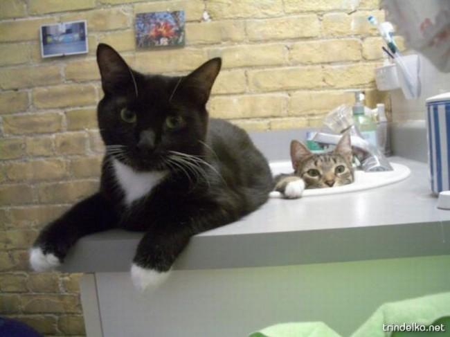 cats_in_sinks_13.jpg