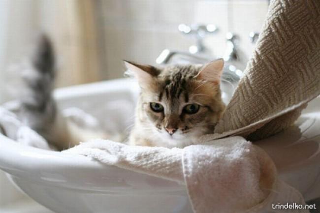 cats_in_sinks_18.jpg