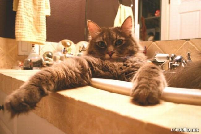 cats_in_sinks_03.jpg