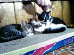 Кот матрос и его новая когтеточка