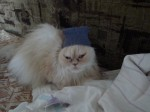 Моя кошка Марта